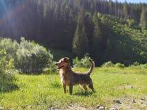 Glorierijke hond die zich tegen bergachtergrond bevindt stock foto's