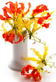 Gloriosa. Beautiful gloriosa in a vase on the table Royalty Free Stock Photos