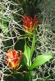 Gloriosa i mossor Orangerit Schoenbrunn i Wien Royaltyfria Bilder