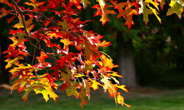 Glorious fall Royalty Free Stock Images