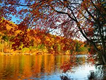 Glorious fall colors with lake as background Stock Photos