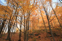 Fall in Ancaster Royalty Free Stock Photo
