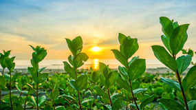 Glorious green plant. At sunrise and beach royalty free stock image