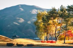 Glorious Moning Light at Yagizaki Park, Japan. Glorious Moning Light at Yagizaki Park at Fujikawaguchiko, a Japanese resort town in the northern foothills of royalty free stock photos