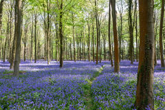 Glorious spring day in Wepham Woods Stock Image