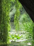 Glorious sunny lake view from beneath a weepy willow tree. Leaves dipping gracefully into calm lily-pad gilded waters stock photography