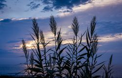 La Jolla shore sunset royalty free stock photo