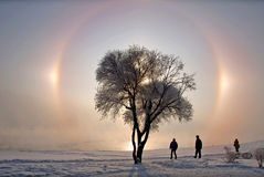 Glory. With multiple suns behind the tree in winter stock photography