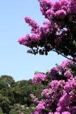 Glory Purple Tree Stock Image