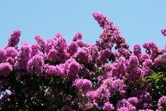Glory Purple Tree Stock Photo
