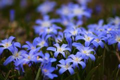 Glory of snow flowers Stock Photo