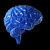 Glossy blue brain Royalty Free Stock Photo