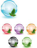 Glossy button with leafs. Set of colorful button with leafs vector illustration