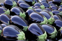 Glossy Eggplant Royalty Free Stock Photography
