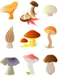 Glossy forest mushrooms Royalty Free Stock Image