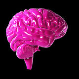 Glossy pink brain Royalty Free Stock Images