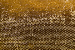 Glossy yellow golden honey comb sweet honey drips flow during harvest background with textspace. Glossy yellow golden honey comb sweet honey drips flow during Royalty Free Stock Photo