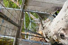 Gloucester-Baum-Aufstieg lizenzfreie stockfotos