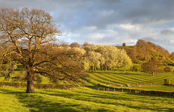 Gloucestershire Landscape. Ridge and furrow field patterns at the base of Meon Hill near the Cotswold village of Mickleton, Gloucestershire, England Stock Photography