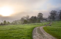 Gloucestershire morning Royalty Free Stock Photo