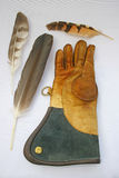 Glove and feathers. Stock Images
