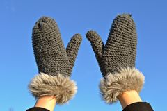 Glove, Fur, Cactus, Wool royalty free stock images