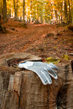 Glove lost in the forest Stock Images