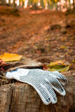 Glove lost in the forest Royalty Free Stock Photo