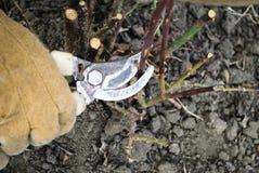 gloved рука Стоковые Фото