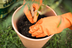 Gloved Gardener Planting a Plant Royalty Free Stock Photography