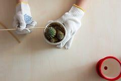 Gloved handen die cactus in een pot houden Royalty-vrije Stock Fotografie