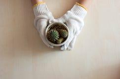Gloved handen die een cactus houden Stock Foto