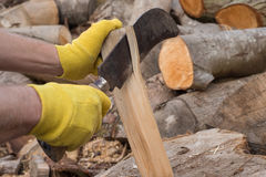 Gloved Hands Cutting Firewood with Reaping Hook. Gloved hands cutting firewood with a reaping hook Stock Image