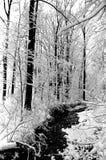 Glover de Winter van het Park Royalty-vrije Stock Fotografie