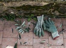 Gloves for gardening Stock Photo