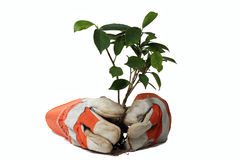 Gloves  and plant. Trusty orange gloves  and plant with clipping path Stock Photo
