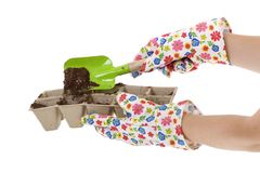 Gloves, Shovel Placing Soil into Compost Pots. Gardener wearing colorful flower patterned gardening gloves is using a green shovel to place soil from a silver stock image