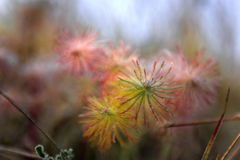 Glow. Blurred glow flowers on a cold morning, high dynamical range image Royalty Free Stock Photography