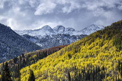 The Glow of Autumn Against Winter. Autumn aspens glow in the morning sun with a early snow on the Wasatch mountains in Utah USA Royalty Free Stock Photography