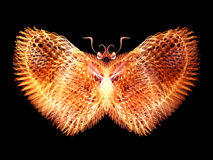 Glow of Butterfly Stock Image