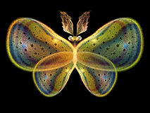 Glow of Butterfly Stock Photos