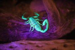 Glow in the dark danger Stock Image