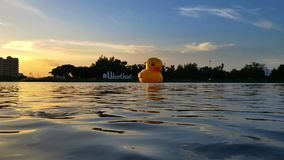 Glow in the evening. Glow sunset with yellow duck Stock Photos