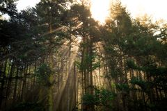 Glow in the Forest Trees, Deception Pass State Park. Washington royalty free stock photography