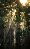Glow in the Forest Trees, Deception Pass State Park. Washington royalty free stock image