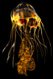 Glow Gold Jellyfish Stock Photos