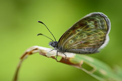 Glow image of Butterfly Stock Photography