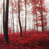 Glow light autumn forest. Oversaturated red autumn foggy forest. Glow light and color filter used Stock Images