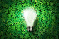 Glow light bulb is on green grass background , concept idea, illustration Stock Image