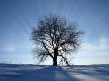 Glow tree. The sun sets behind a tree. Very cold winter evening. Russia Stock Photos